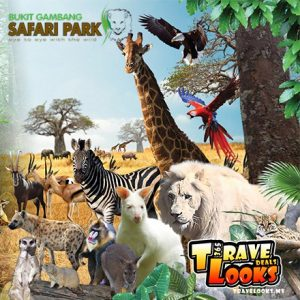 safari park tiket gelang juragan gelang